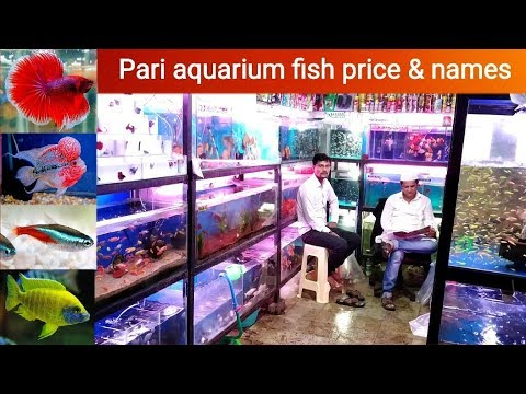 Fish price at Pari fish aquarium, Kurla east 🐟🐠🐡