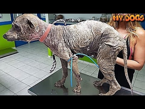 Rescue a Homeless Dog That Looked Like He Was Made Out of STONE Undergoes IncredibleTransformation