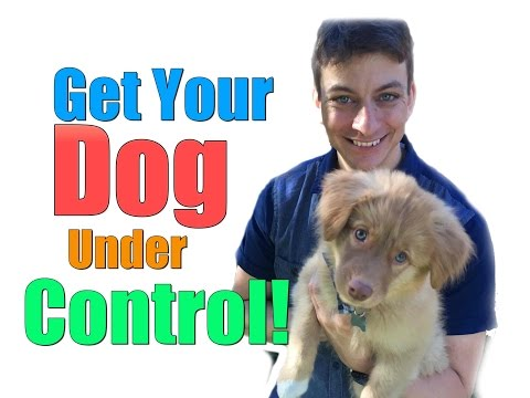 What to Do if Your Dog Just Won't Listen to You Around Guests, Cats, Puppies, Cars and More!