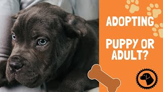 Adopting a Dog | Adopt a ADULT or a PUPPY?  | Which is Best for You? | DOG BLOG 🐶 #BrooklynsCorner