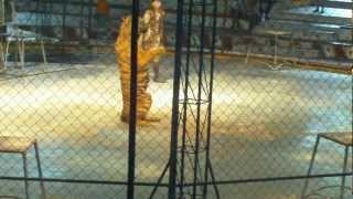 The Tiger Show at Sriracha Tiger Zoo. Thailand