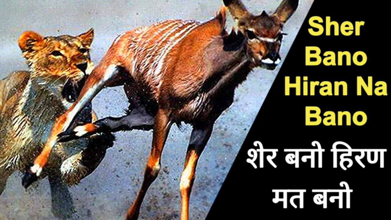 Sher Bano Hiran Na Bano | शेर बनो हिरण मत बनो | Be a Lion Don't be a Deer