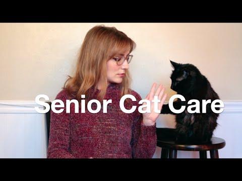 Senior Cat Care Tips!