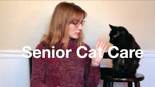 Senior Cat Care Tips!