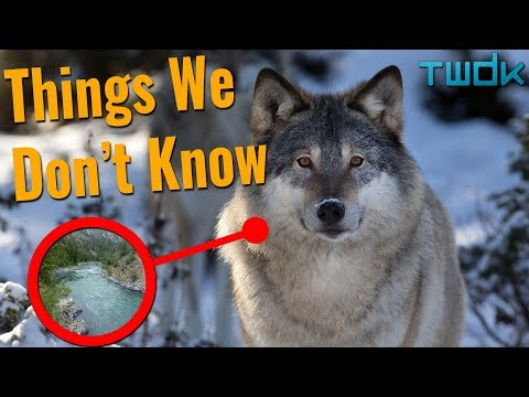 How Do Animals Change The Environment? - Things We Don't Know