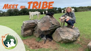 MEET ALL MY ANIMALS! Horses, Ponies, Donkeys, Cats, Dogs \u0026 a few others! THE WHOLE TRIBE!