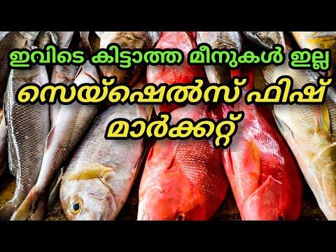 Seychelles Tour  Seychelles Fish Market സെയ്ഷെൽസ്ലെ മനോഹരം ആയ ഫിഷ് മാർക്കറ്റ് Malayalam Vlog:16