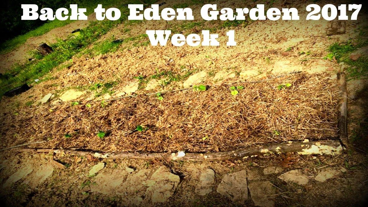 back to eden garden 2017: week 1 - youtube