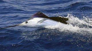 Los 5 peces más rápidos del océano