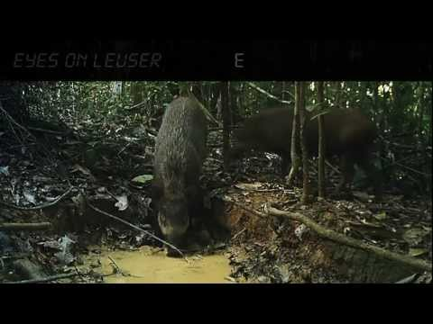 Eyes on Leuser / BPKEL I.mp4