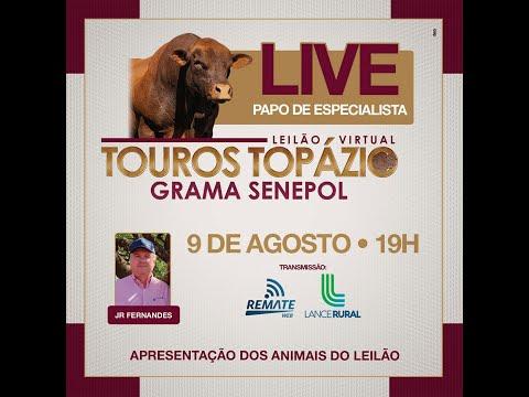 Papo de Especialista: Touros Senepol Topázio 2021: Leilão A Cabeceira da Safra.