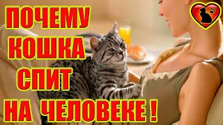 Так вот, почему на самом деле кошка спит на человеке! Основные и мистические причины!