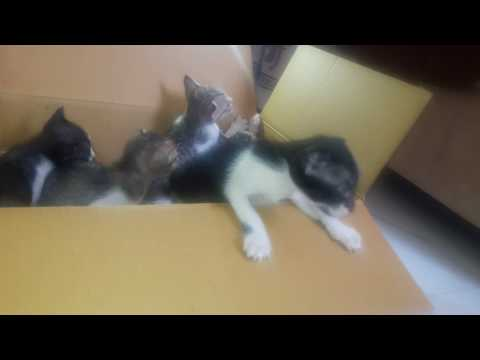 Kittens Meowing  in the box....