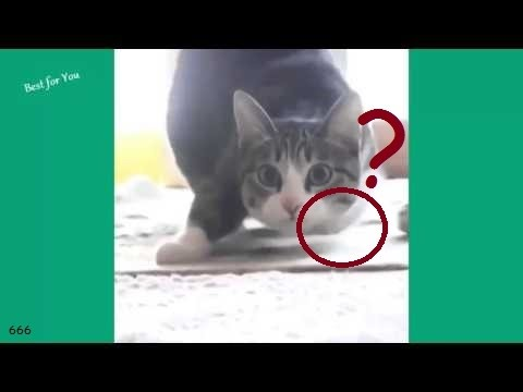 Quake Quake Earthquake + More | Kittens Timi and Mimi | Children's Safety Tips| BabyBus Portuguese from YouTube · Duration:  11 minutes 55 seconds
