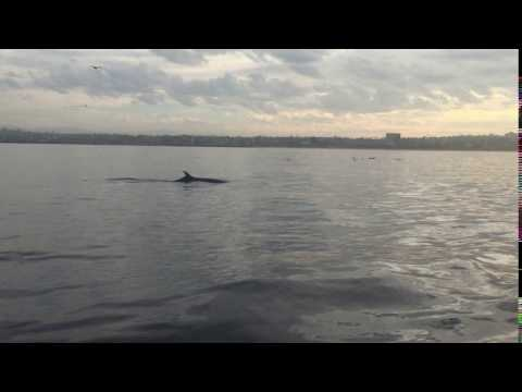 What a minke whale sounds like when it breathes