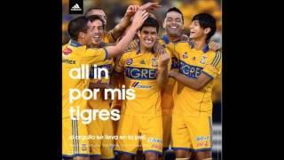 All In Por Mis Tigres (Canción)
