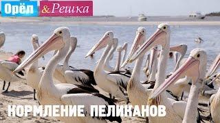Голодные пеликаны и Леся Никитюк! Орёл и Решка. Рай и Ад