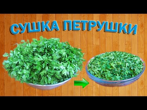 Как сушить петрушку?   Сушеная зелень   Травы приправы   Пряности