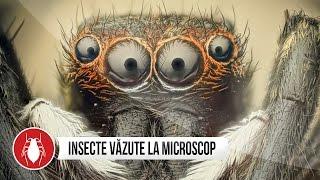 INSECTE VAZUTE LA MICROSCOP