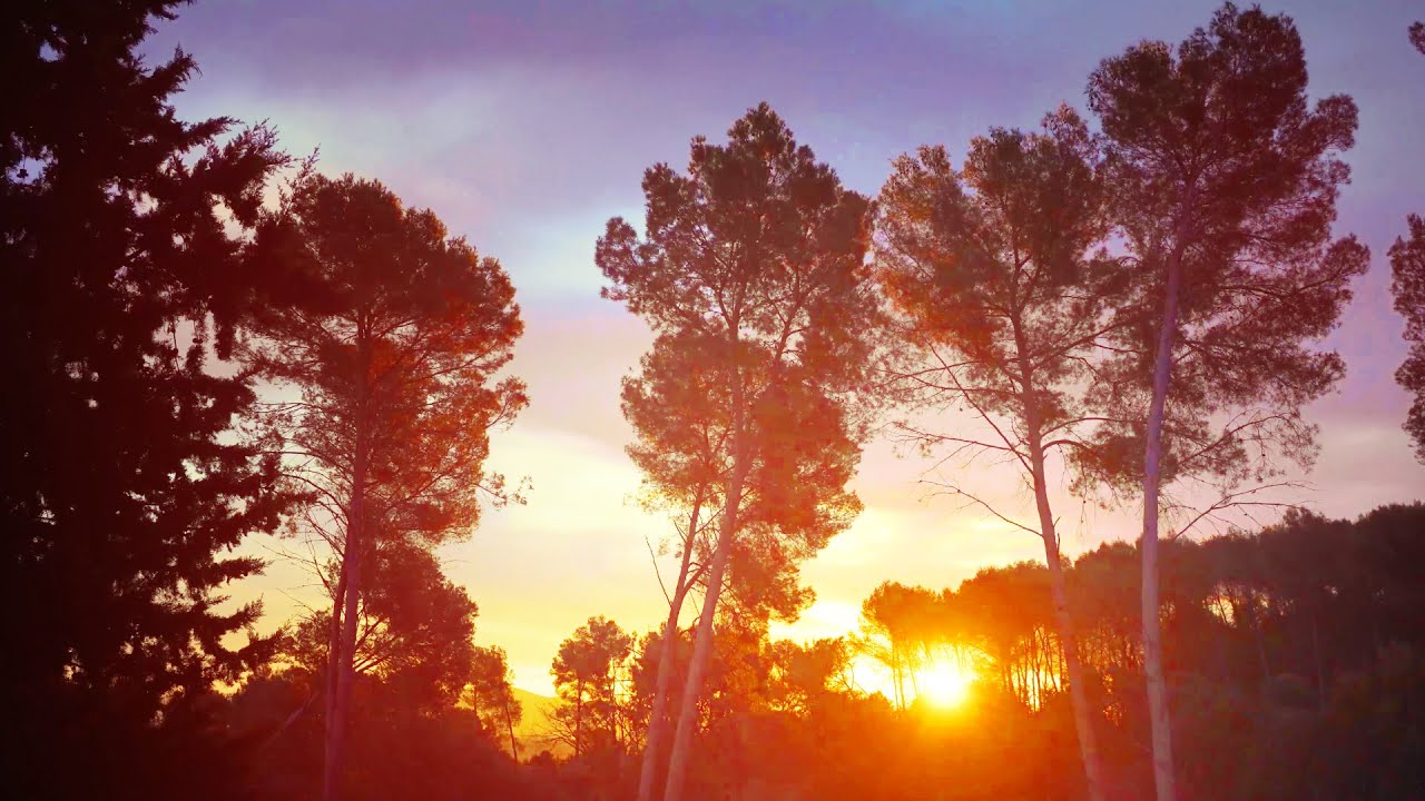 4K Timelapse Beautiful Morning Clouds in the forest / Relaxing sunshine sky FREE stock footage