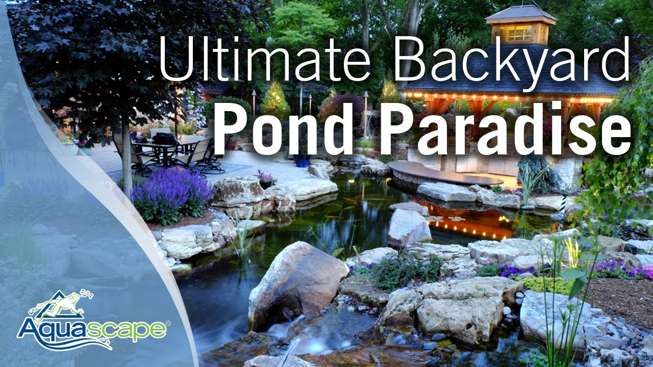 ultimate backyard pond paradise youtube