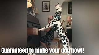 GUARANTEED TO MAKE YOUR DOG HOWL l Howling dogs Compilation 2019