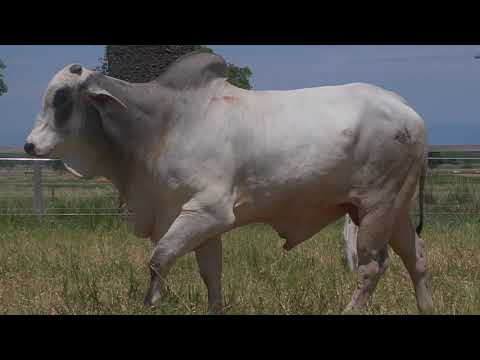 LOTE 131   GPO A 3753
