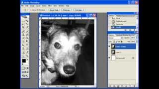 Creating A Dog Portrait Pattern W/ Photoshop Pt 1 Of 7