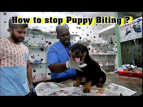 how-to-stop-your-puppy-biting,-chewing-and-nipping-?