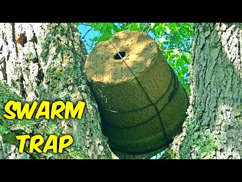 Setting Up Bee Swarm Trap - Beekeeping