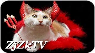 Дьявольский кот... Уморительные приколы с животными №166. Best fun with animals #166
