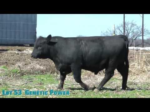 Lot 53  Genetic Power