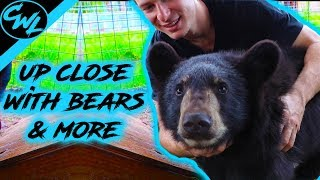 UP CLOSE WITH BEARS, BABOONS, & MORE!