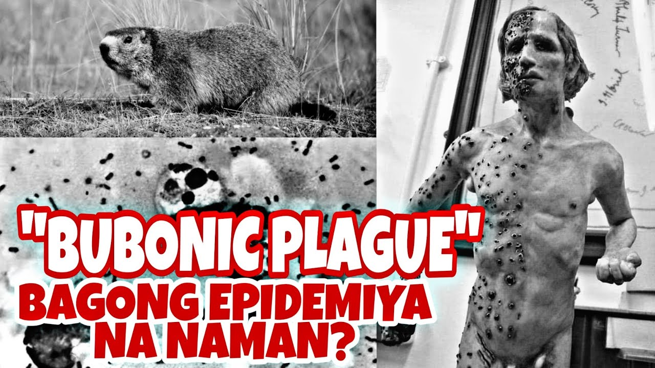 BUBONIC PLAGUE CASES FOUND IN CHINA - YouTube