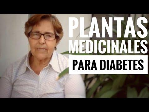 hierbas medicinales para la diabetes en bangladesh 2025