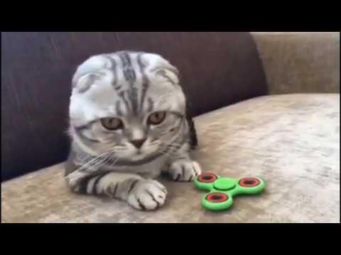 Смешные кошки - Кошки, сайт о