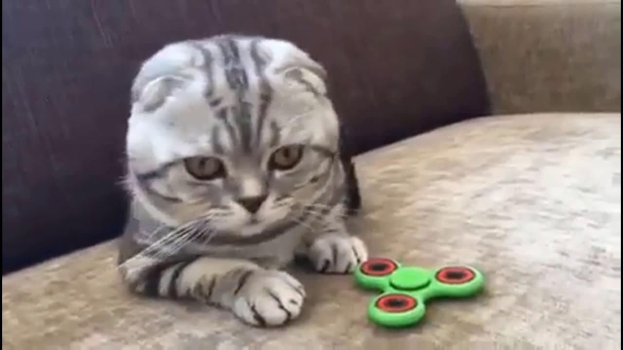 Смешные видео про кошек котят и котов до слез