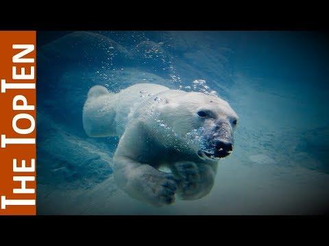 The Top Ten Biggest Bears in the World