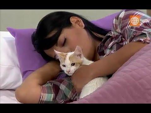 ¿Dormir con tu gato puede contagiarte de toxoplasmosis? 08-07-2015
