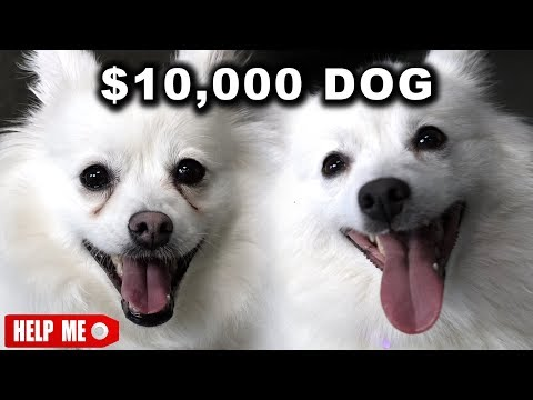 Download Youtube: $10,000 DOG VS. $1 DOG