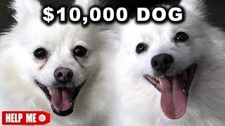 $10,000 DOG VS. $1 DOG by : jacksfilms