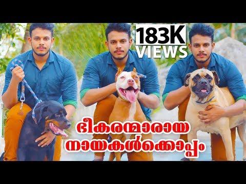 അതിഭീകരരായ 3 നായകൾക്കൊപ്പം രാഹുൽ Pitbull dogs malayalam Oru adaar pets story