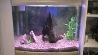 my aquarium aqua one ar 850 part 3 update