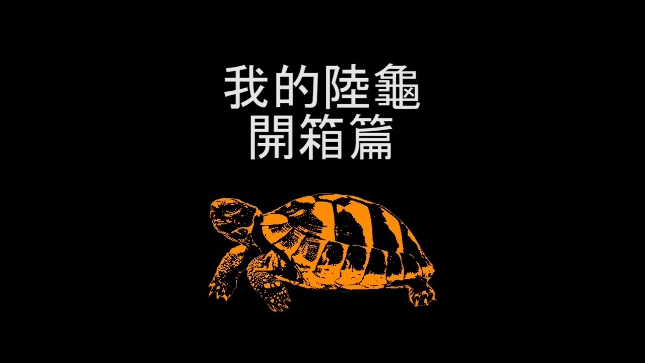 我的陸龜-開箱篇(慎選賣家)