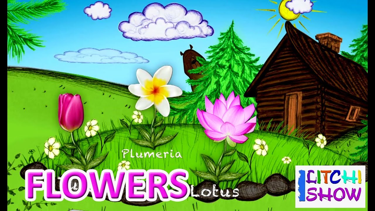learn english flowers names with picture for children  flowers, Beautiful flower