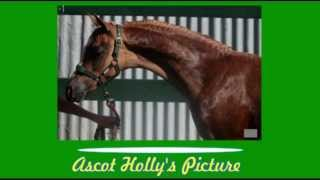 Ascot Holly's Picture Thumbnail