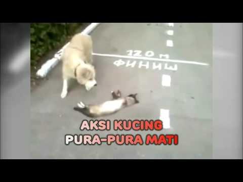 Kucing Pura-Pura Mati
