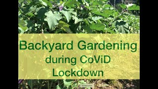 Backyard gardening during Community Quarantine due to CoVid-19 by Ruben Lazaro of Lallo, Cagayan