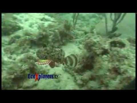 EcoXplorers - Commercial Dive - show 3