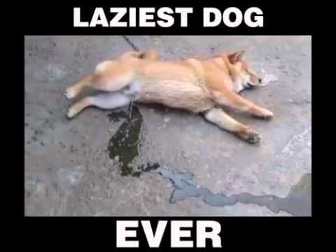 Good Advice Dog Laying Down The Wisdom By Flavius Meme Center